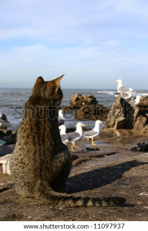 Cat looking for his meal - stock photo