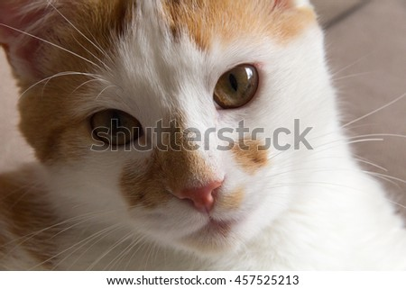 Cat looking in camera