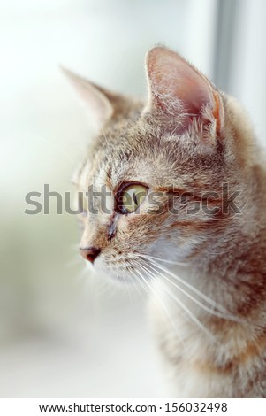 Cat looking in the window. Place for text. - stock photo
