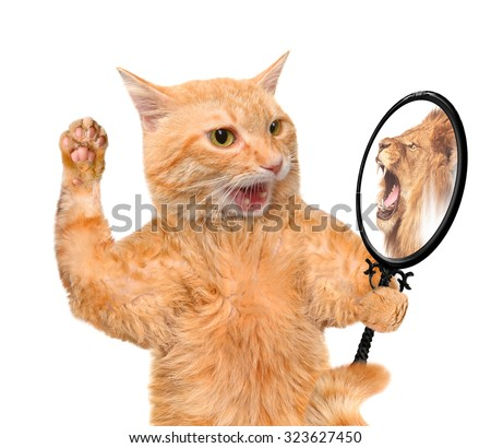 Cat looking into the mirror and seeing a reflection of a lion. - stock photo