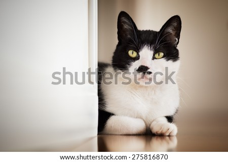 Cat looking out from behind a wall - color version - focus on the eye. The left wall is easily used ad a copyspace  - stock photo