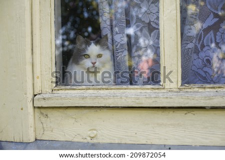 cat looking out the window - stock photo