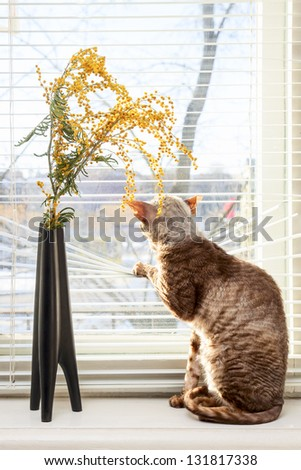 Cat looking outside through venetian window blinds - stock photo
