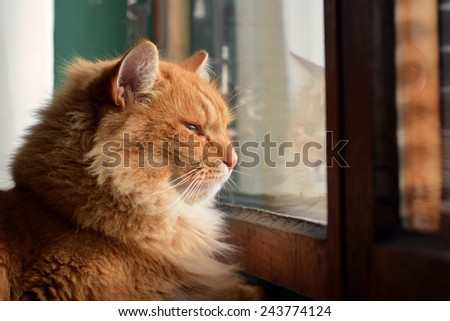 Cat looking outside through window - stock photo