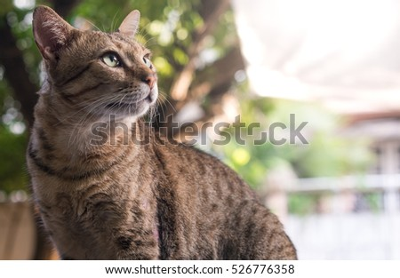 cat looking right