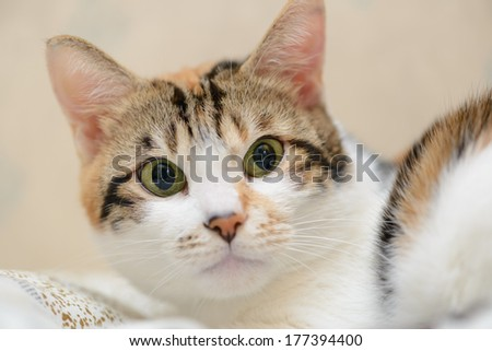 Cat looking straight close up