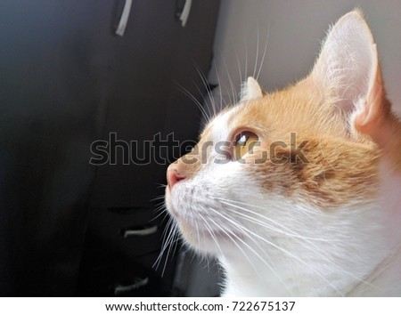 Cat looking the sunshine through window