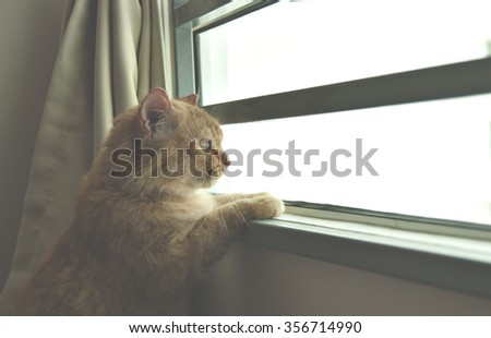 Cat looking through a window with curious expression. Image edited with lightness effect to create mood. - stock photo