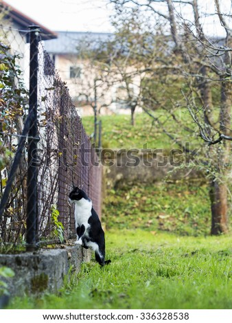Cat looking through the neighbours fence. - stock photo