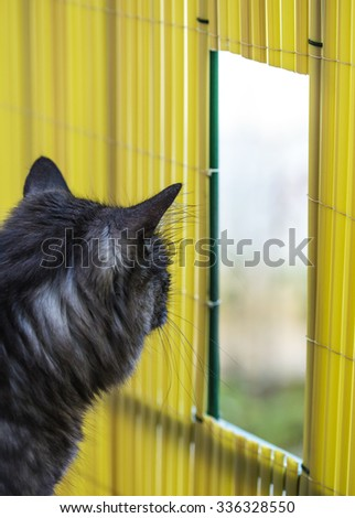 Cat looking through the small hole, leading outside. - stock photo