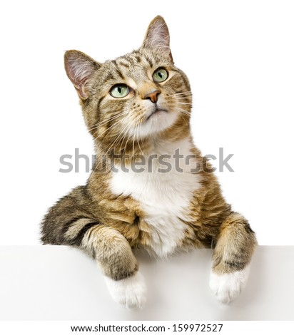 Cat looking up above white banner