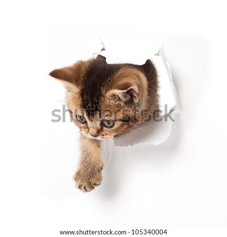 cat looking up in paper. - stock photo