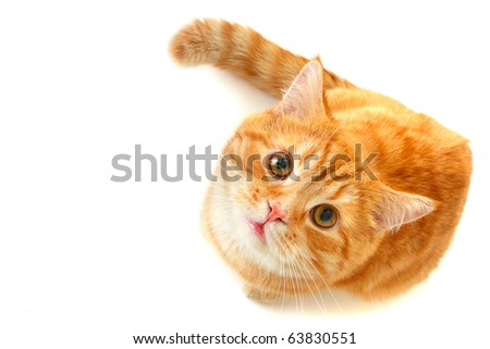 Cat looking up - isolated on white - stock photo