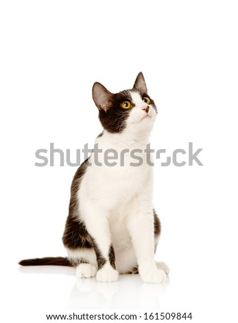 Cat looking up. isolated on white background - stock photo