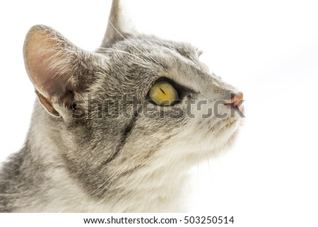 Cat looking up, observing