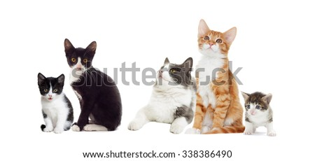 cat  looks, isolated on white background