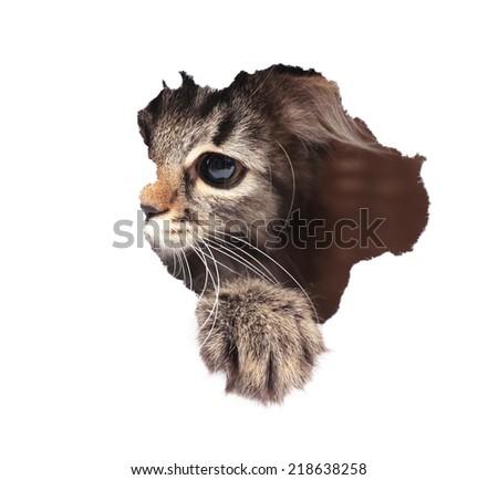 Cat looks through hole, isolated on white - stock photo