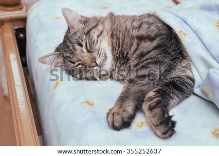 Cat lying in bed covered with blankets