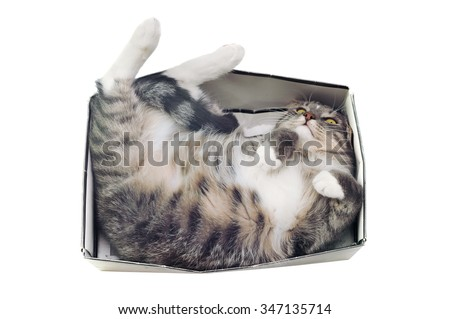 cat lying in box on white background. High-key photo technique - stock photo