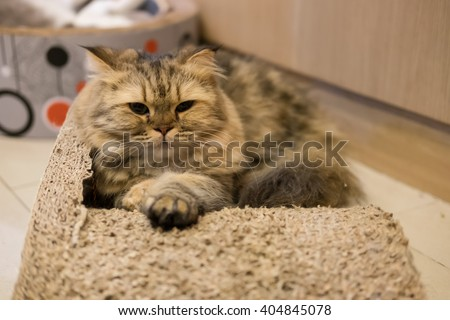 Cat lying in cat bed - stock photo