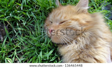 Cat lying in the shade. - stock photo