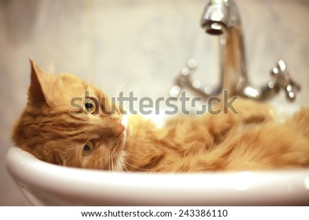 Cat lying in the sink - stock photo