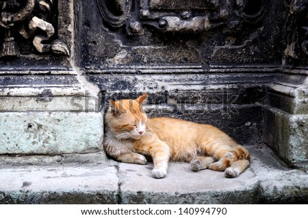 Cat lying in the street by the wall - stock photo