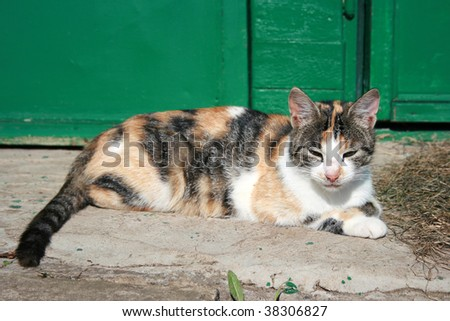Cat lying near the doors