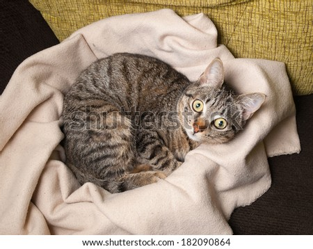 Cat lying on a blanket at home