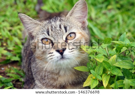 Cat lying on a grass - stock photo