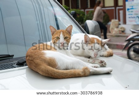 cat lying on a white car on the street., cat on the car