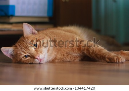 Cat lying on an floor. Selective focus photography. - stock photo