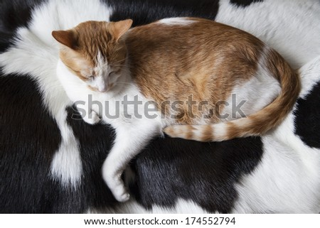 Cat Lying on Black and White Cowhide
