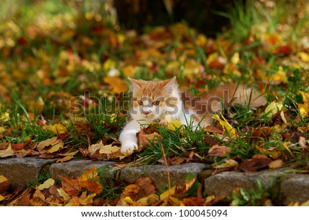 cat lying on the autumn foliage - stock photo