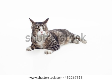 Cat lying on the floor and looking at camera isolated on white background