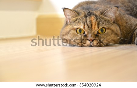 Cat lying on the floor, close up - stock photo