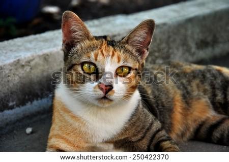 Cat lying on the sidewalk - stock photo