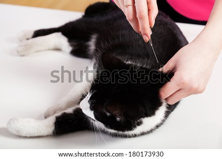 Cat lying on the table during injection - stock photo