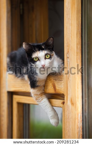 Cat lying on the window frame - stock photo