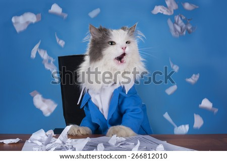 cat manager in a suit sitting in the office - stock photo