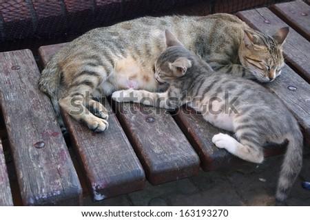 Cat mom and nursing kitten - stock photo