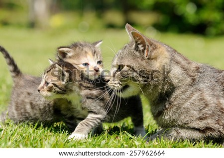 cat mother and kitten on meadow - stock photo