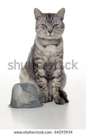 Cat mouse and mousetrap, on white background. - stock photo