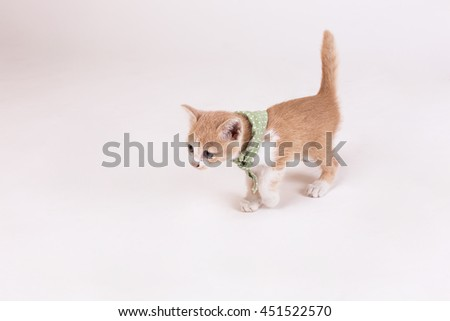 Cat movement,Kitten Brown on white background.