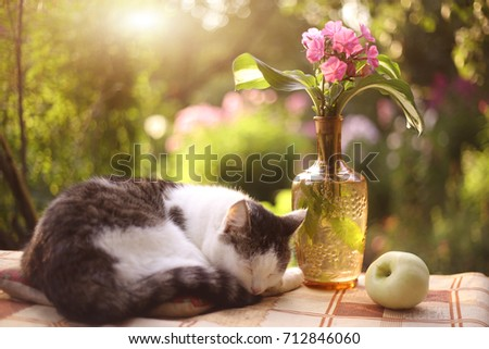Cat Napping Sleep Flox Flowers Vase Stock Photo Download Now