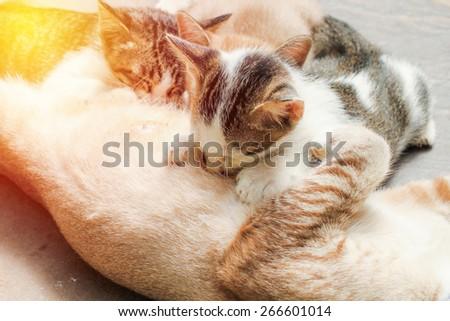 Cat Nursing her Kittens. Vintage filter. - stock photo