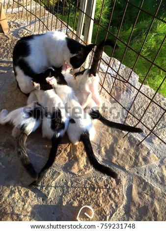Cat nursing her little kittens in sunset, close up.