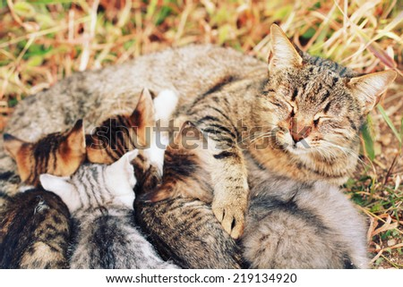 cat nursing their young kittens with a vintage retro instagram filter - stock photo