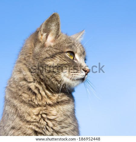 cat on a background of blue sky
