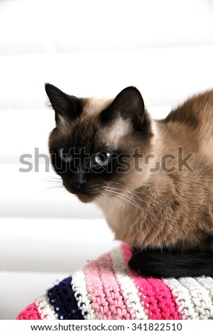 cat on a background of white wall